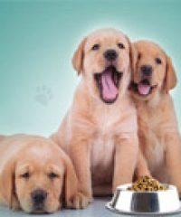 Prime Pet Foods