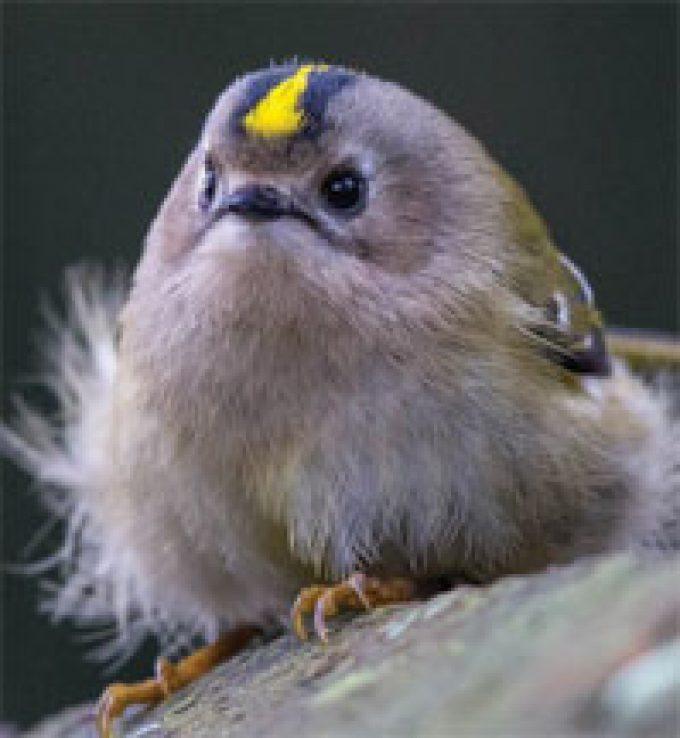 Essex Wildlife Trust