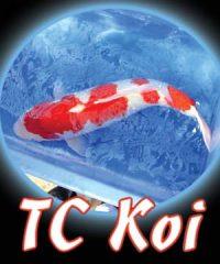 Tc Koi